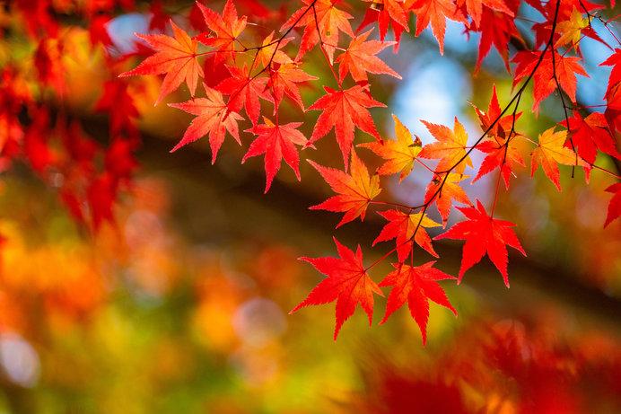 秋のPLSフォーラム